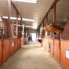 steel frame buildings for stables
